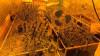 В Гусь-Хрустальном следователями направлено в суд уголовное дело о незаконном хранении наркотических средств